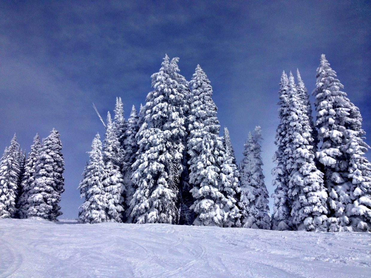 Lots of snow and brilliantly cold on Mount Werner. Submitted by: Verleen Tucker