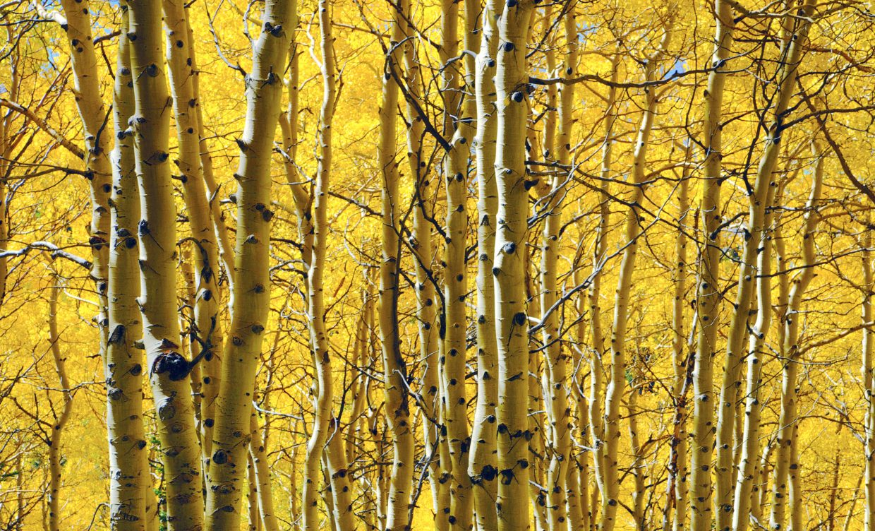 A golden hue for the Yampa Valley. Submitted by Madison Slater.