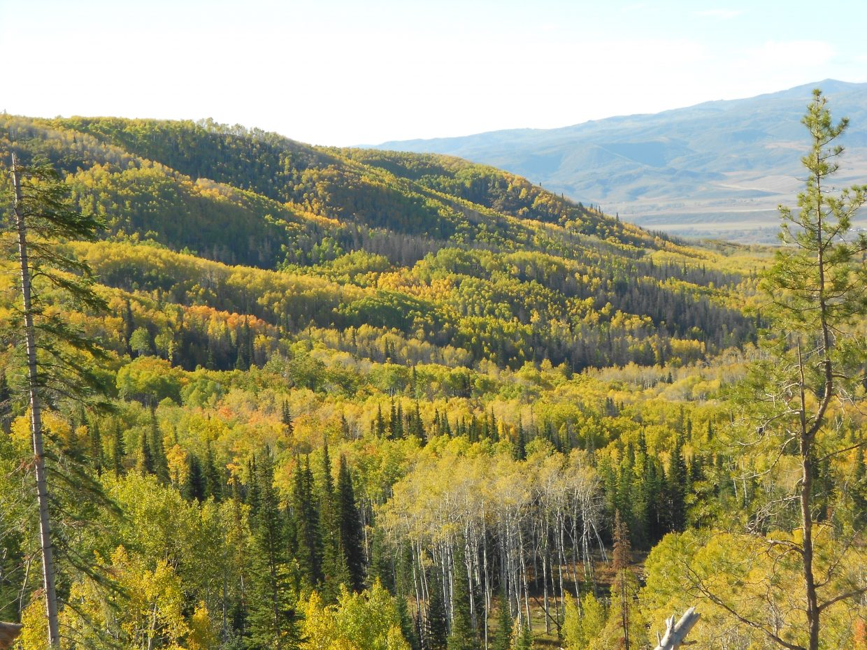 Emerald Mountain on Oct. 14. Submitted by: Maryedith Davies
