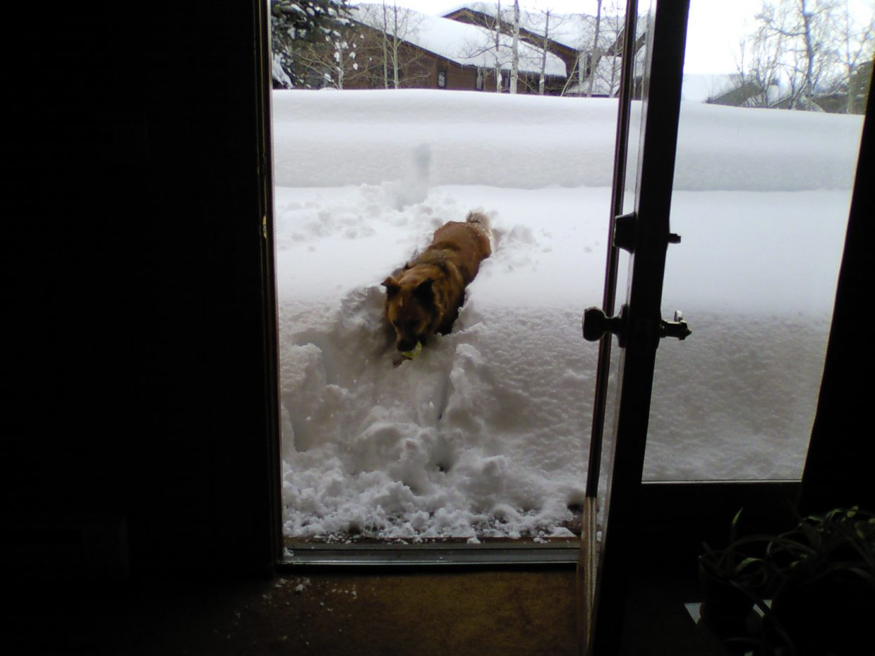 This is snow just from the past three days. Samson loves powder days, too! Submitted by: Kelly Gilleland