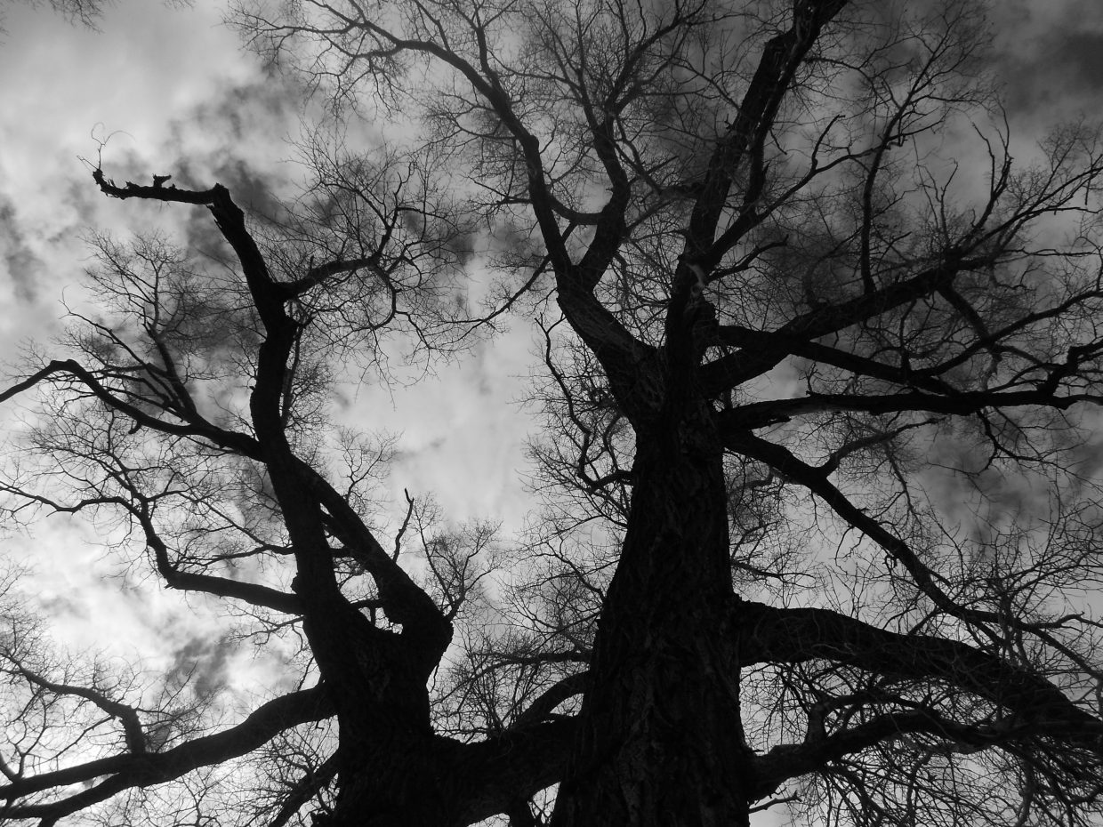 My new favorite tree. Submitted by: Maryedith Davies