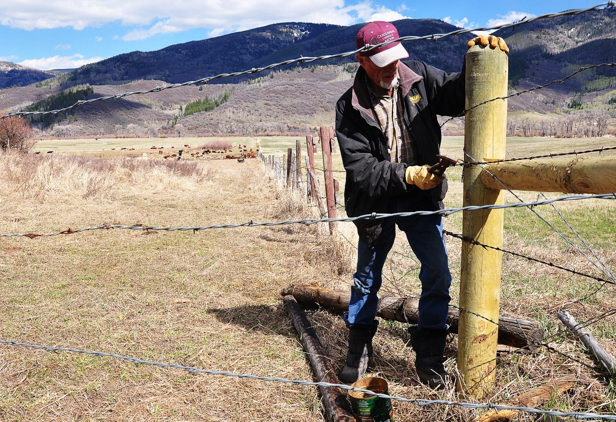 Bill Gay mends fence Saturday on his ranch on Routt County Road 18. Gay said the mending is a spring ritual.