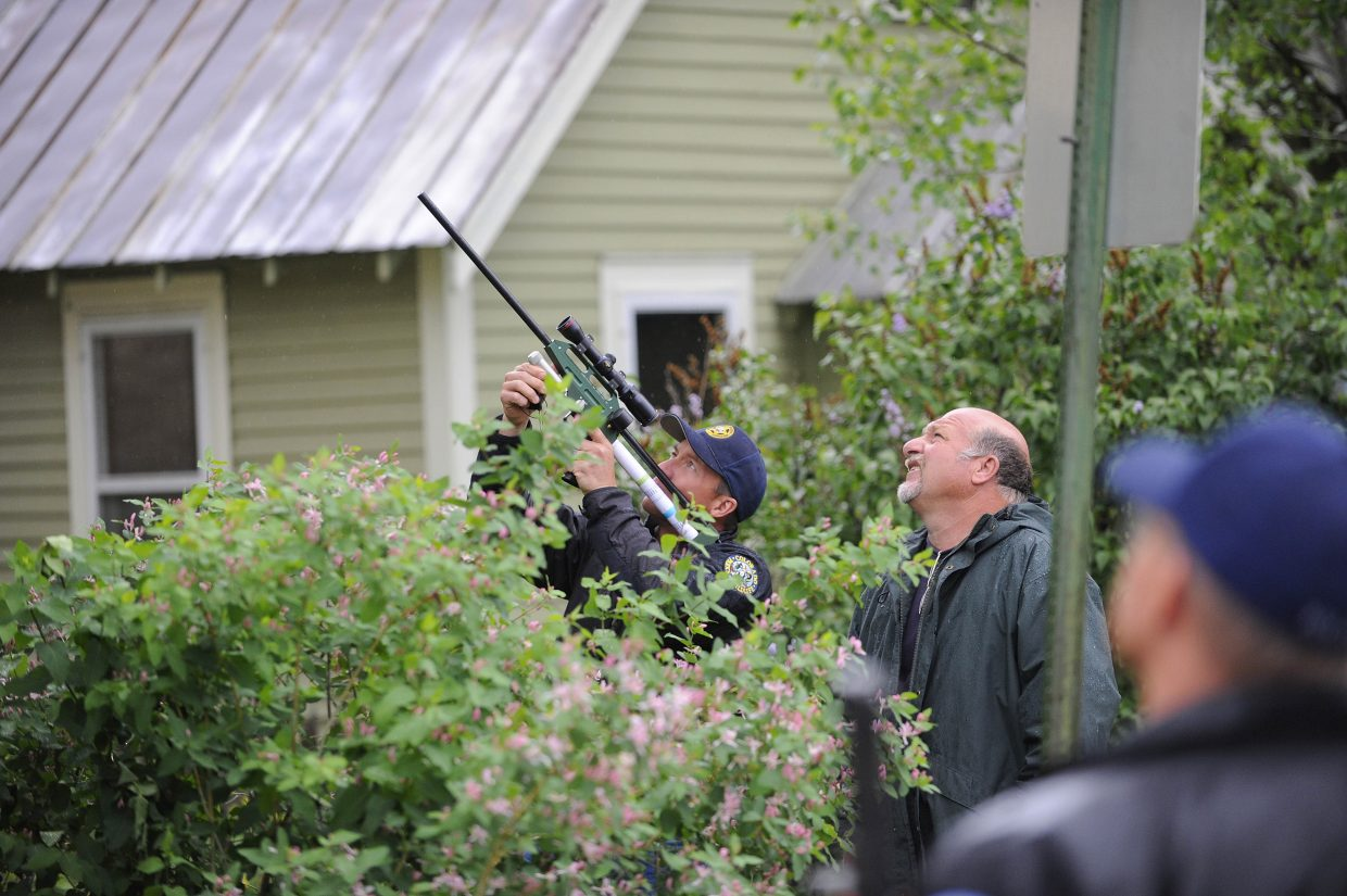 Colorado Division of Parks and Wildlife Area Wildlife Manager Jim Haskins watches as Steve Znanenacek shoots the bear with a tranquilizer so it can be relocated from Steamboat Springs. They were hoping the bear would fall asleep and then fall out of the tree.