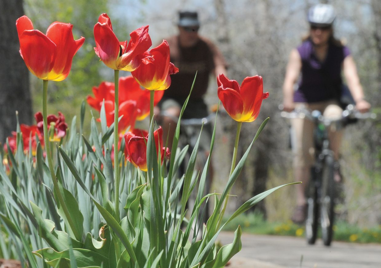 Steamboat Springs residents Bryan and Julie Alkema ride their bikes past flowers on the Yampa River Core Trail on Thursday afternoon.