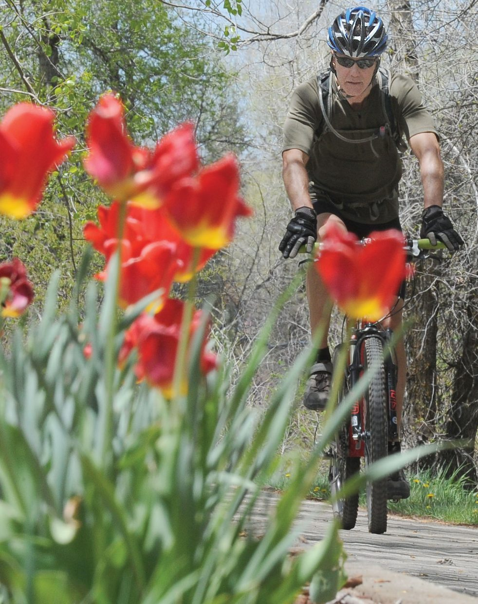 Steamboat Springs resident Craig Olsheim rides his bike past the flowers on the Yampa River Core Trail on Thursday afternoon.
