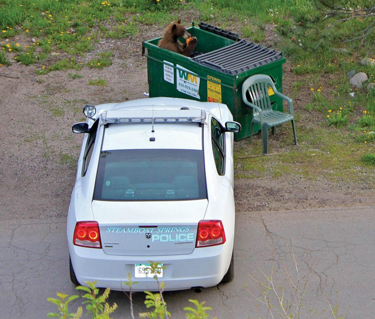 A bear snacks on garbage in a dumpster near 11th and Oak streets in downtown Steamboat Springs in 2012. Police said they plan to be more aggressive in enforcing rules meant to keep bears out of trash cans and dumpsters.