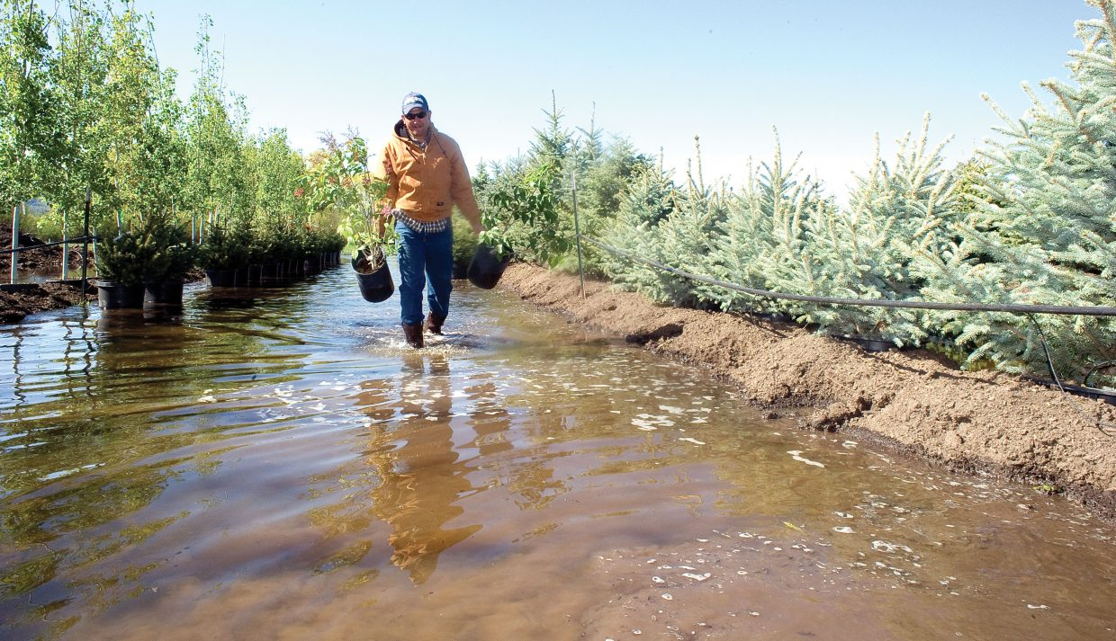 Israel Santos, an employee at the Snow Country Nursery, moves plants to a better location after the rising waters of the Yampa flooded the business Tuesday morning.