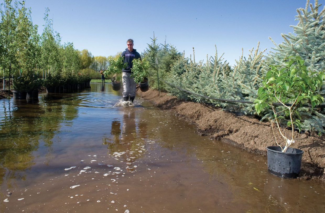 Clay Rogers, co-owner of Snow Country Nursery off east U.S. Hghway 40, moves plants out of an area that was flooded by the rising waters of the Yampa River on Tuesday morning.