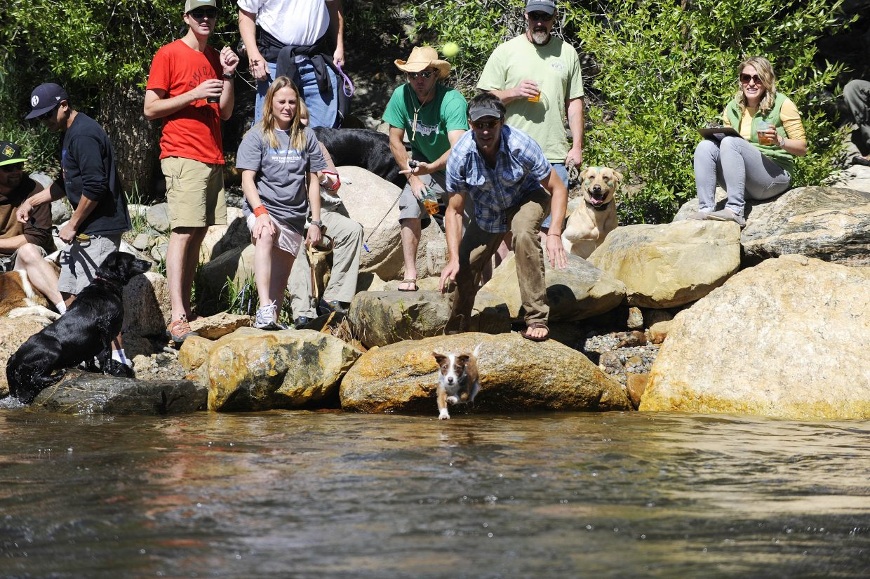 A dog participates in the Crazy River Dog competition.