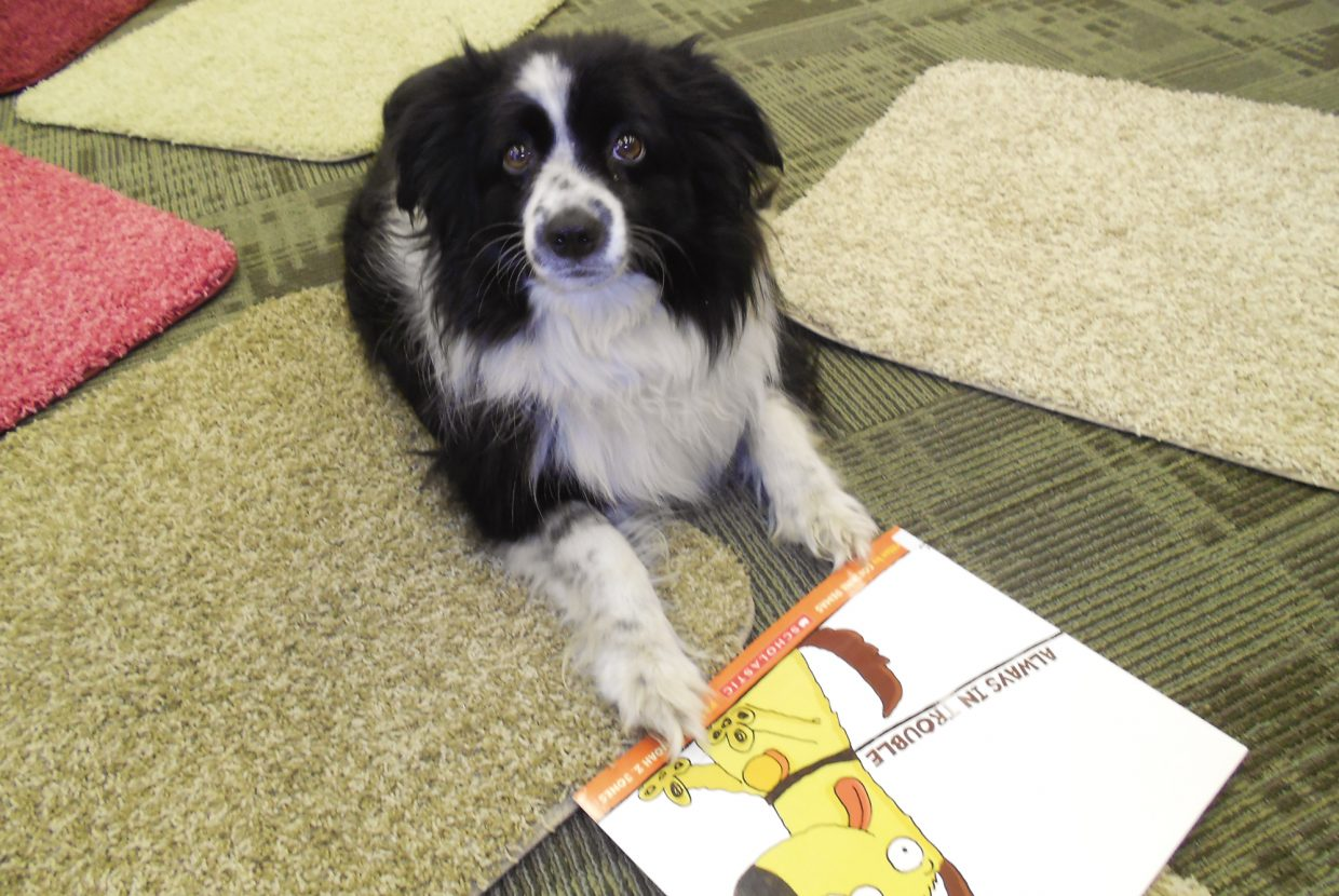 Camo, the 2 1/2-year-old wonder dog, is this summer's first Reader of the Week at Hayden Public Library.