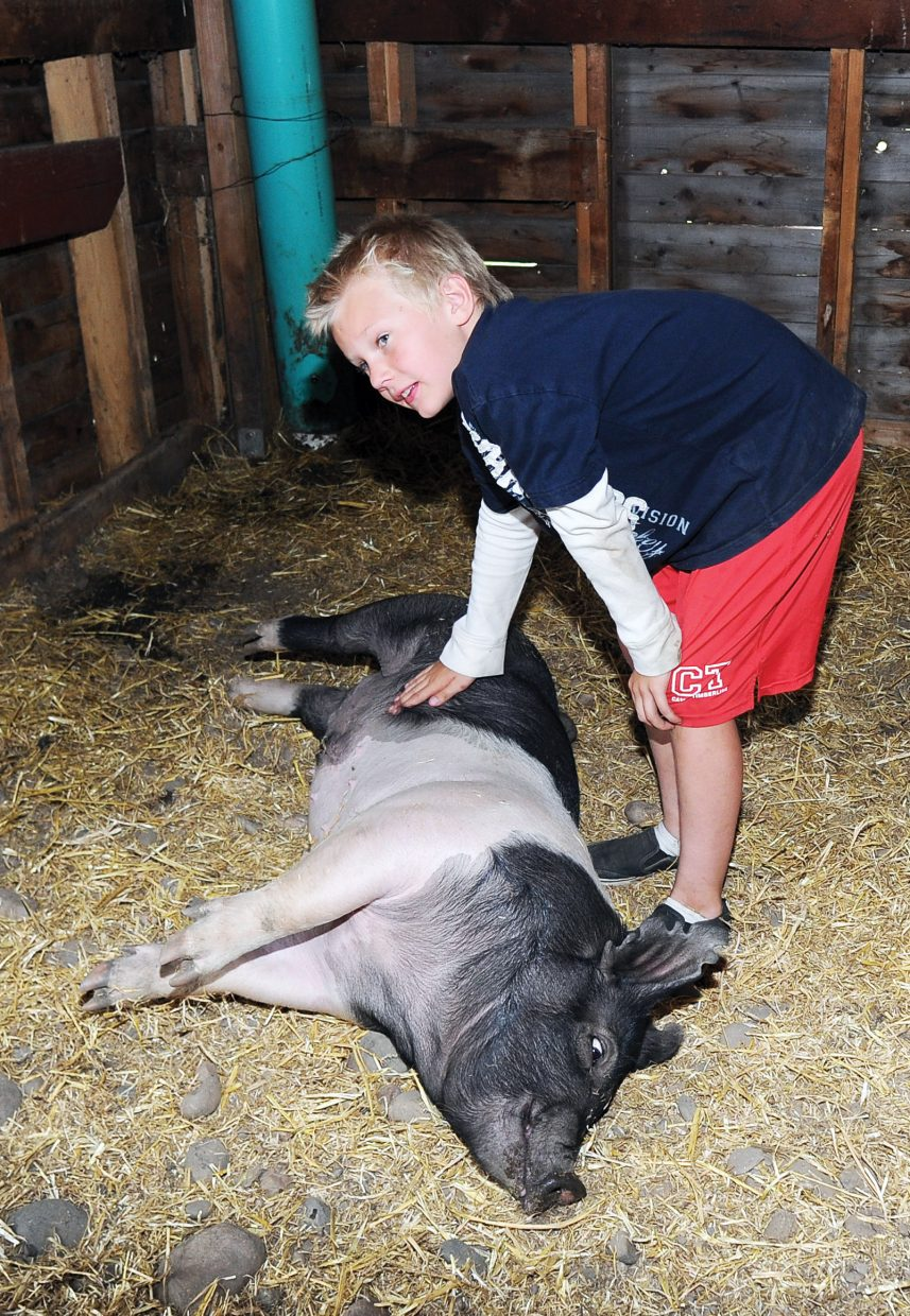 Smith Dean rubs the belly of his pig, Tiko, in a barn at the Legacy Ranch just outside Steamboat Springs.