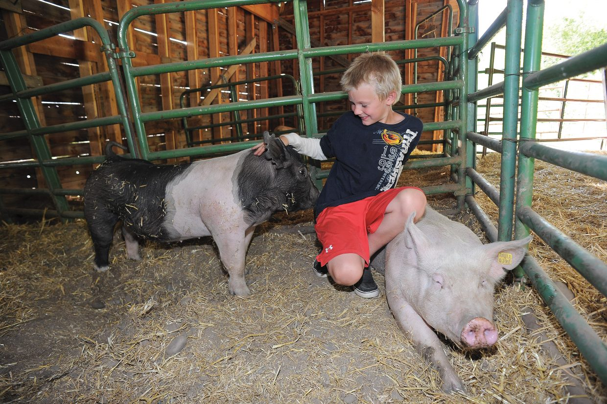 Smith Dean spends some time with his pig, Tiko, and his sister's pig in a barn at the Legacy Ranch just outside Steamboat Springs.