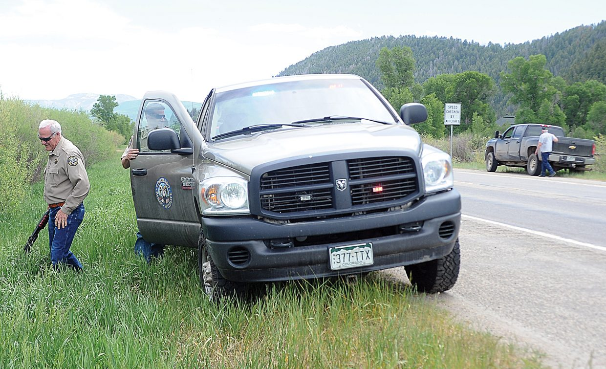 Colorado Parks and Wildlife District Wildlife Manager Mike Middleton prepares to head into thick brush to check on a bear after it was struck by a pickup. Middleton found the bear, which already had died from the injuries it sustained in the collision.