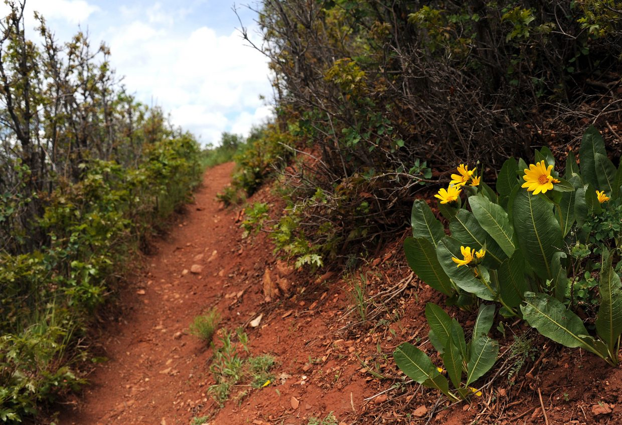 Red Dirt Trail winds up from Routt County Road 129, flowing, after six grueling miles, into Mount Zirkel Wilderness Area. The trail has a bit of everything, from flowers, to pines to aspens.