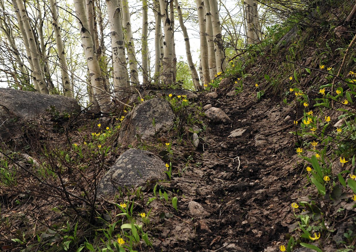 Red Dirt Trail gains more than 2,500 feet between the trailhead and Mount Zirkel Wilderness Area. The vast majority of that six-mile stretch is uphill.
