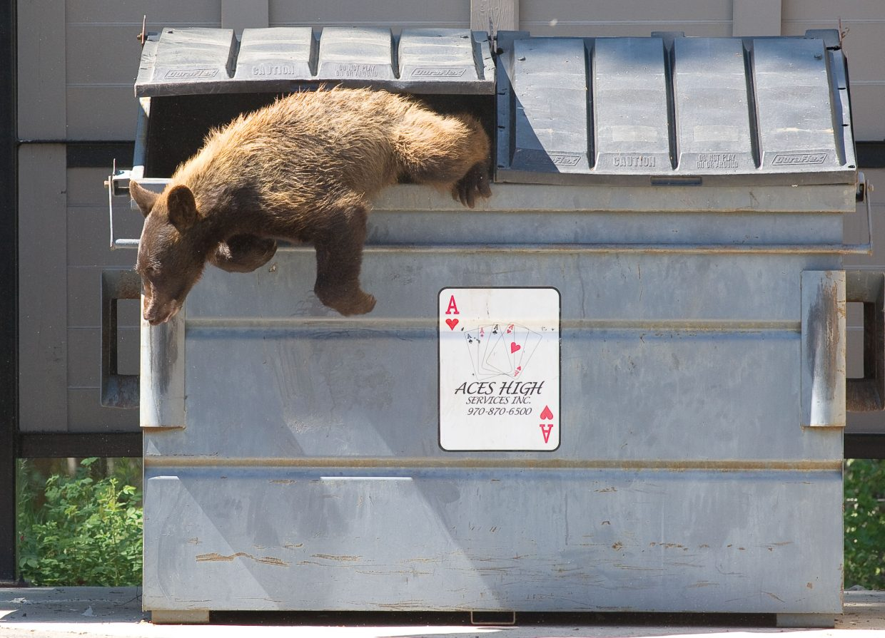 With the warmer weather and receding snow, black bears are emerging from hibernation in the Yampa Valley. Wildlife officials are urging residents to secure their dumpsters and any other attractants that could lead to conflicts with wildlife.