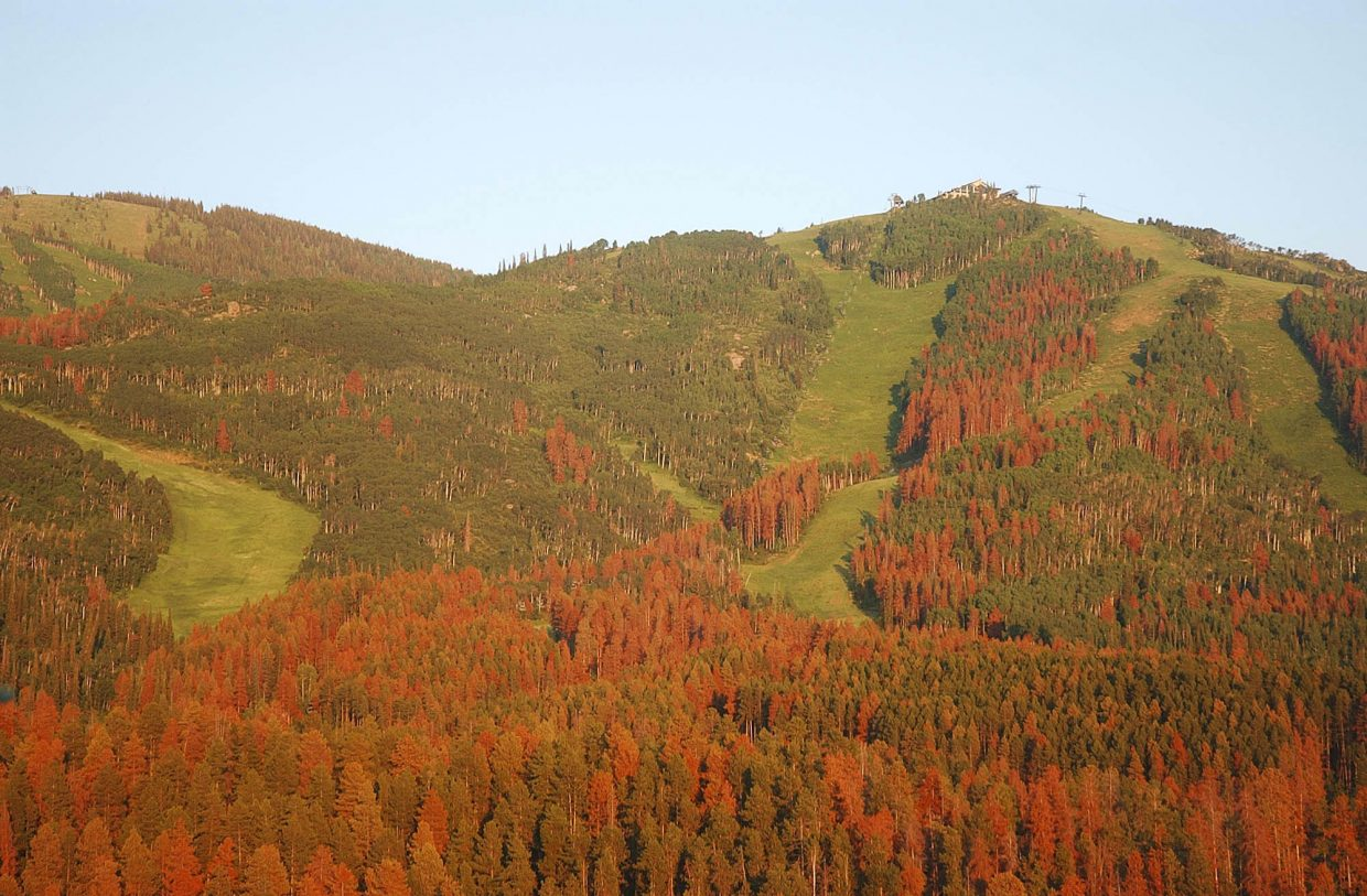 Thousands of trees on Mount Werner turned red in 2007 as mountain pine beetles devoured them. As the epidemic declines, so too has public fears about the impacts of invasive insects, according to a recent study funded by the National Science Foundation.