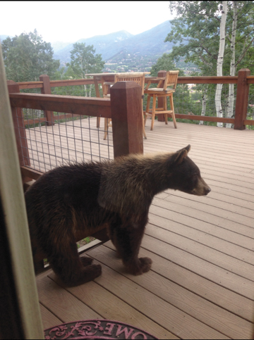 Steamboat Today reader John Hoover shared this photo of a bear at Tree Haus. Steamboat Springs authorities are preparing for what historically has been the height of bear activity in the city.