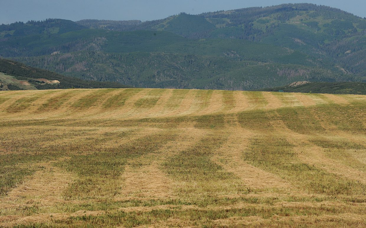 Hay waits to be raked in a field just outside of Steamboat Springs.