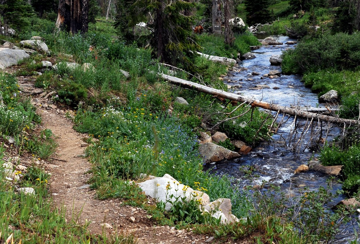 The trail is mostly a steady climb, but there's plenty along the way to keep hikers going. The trail clings to creeks at several points.