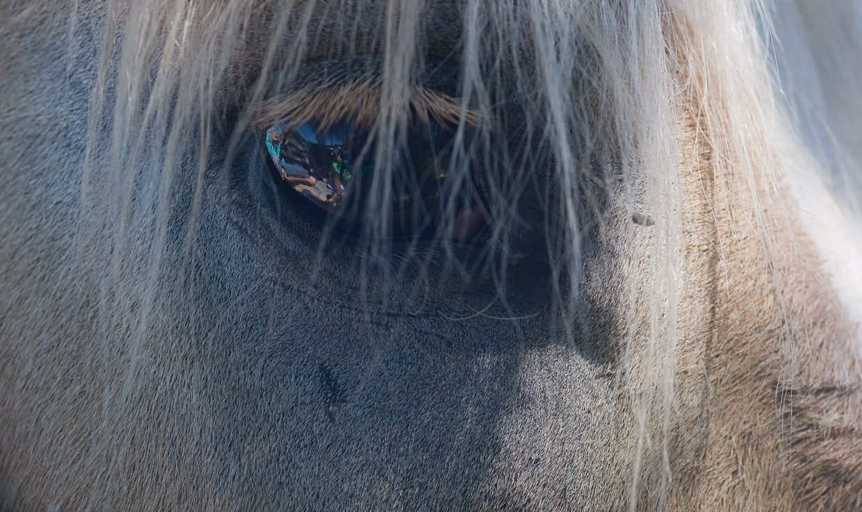 A horse waits patiently while being brushed by young riders during a horseback riding camp sponsored by the city of Steamboat Springs Parks, Open and Recreational Services Department summer programs.
