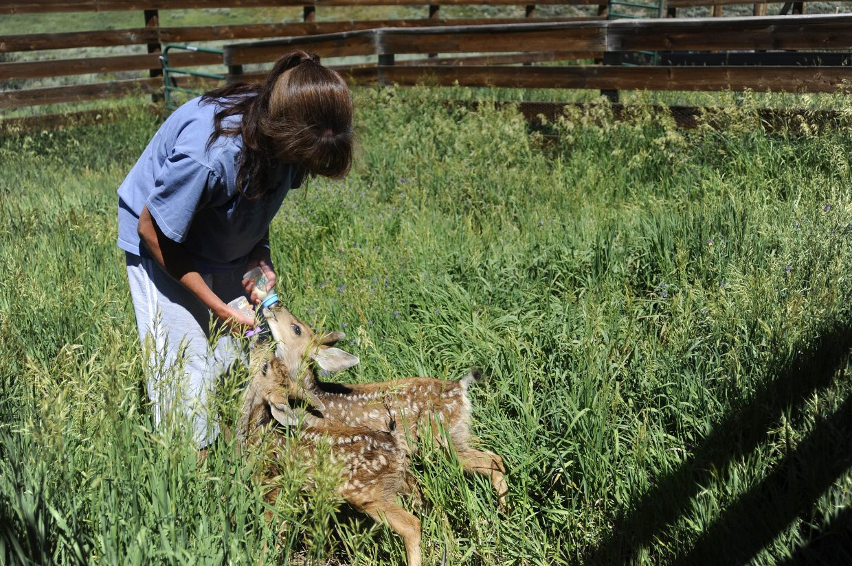 Tracy Bye feeds two deer fawns she is taking care of.