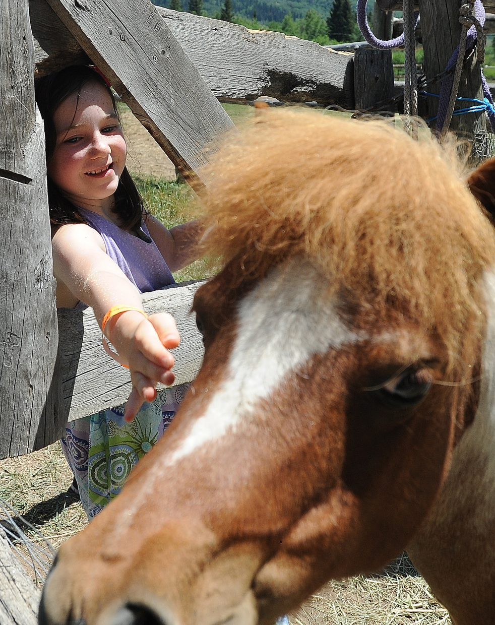 Alena Rossi, 7, reaches to pet a miniature pony Sunday at the Perry-Mansfield Performing Arts School and Camp's open house.