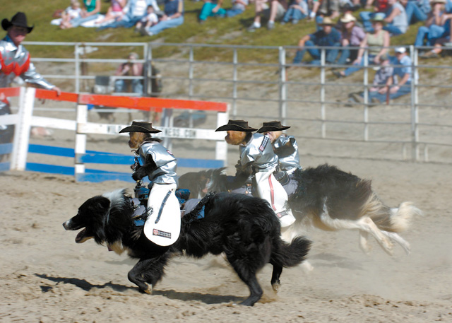 Tim Lepard's white-throated Capuchin monkeys, which ride atop border collies, will perform this weekend at the Steamboat Springs Pro Rodeo.