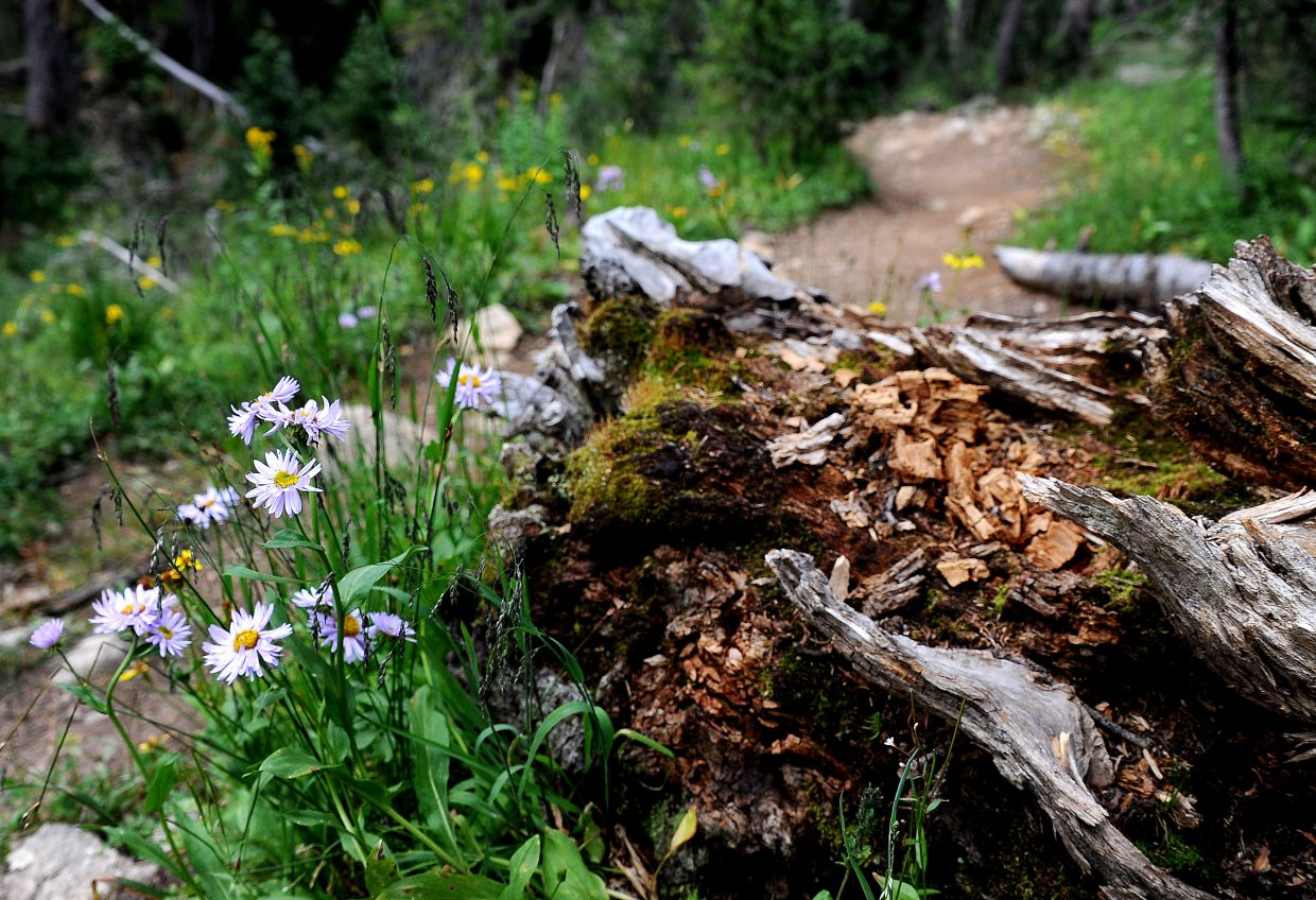 The trail to Jonah Lake isn't long or difficult, but there's plenty of pretty.