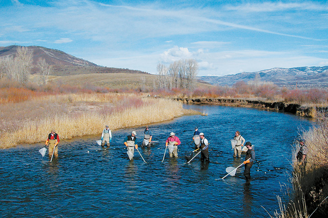 Members of the Yampa Valley Fly Fishers help Colorado Division of Wildlife biologists count the numbers and species of fish in the Yampa River within the boundaries of the Chuck Lewis State Wildlife Area. The survey, completed in late fall 2004, found a few large trout in the stretch, along with northern pike, but very few younger trout. The crew used electro-shocking to temporarily stun the fish, making them easier to locate. They were returned safely to the water.