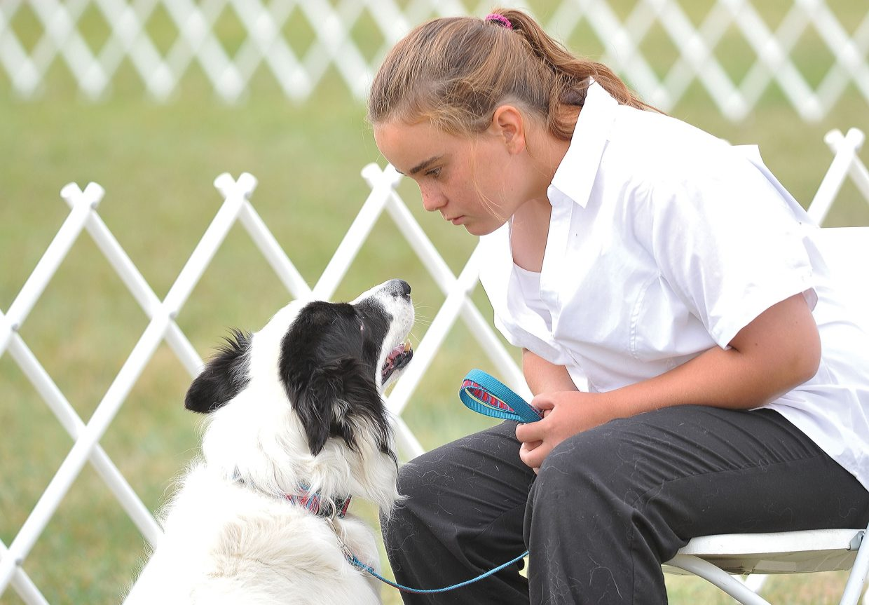 Rachel Rolando and her dog get focused before their turn during Monday morning's dog show at the Routt County Fair.