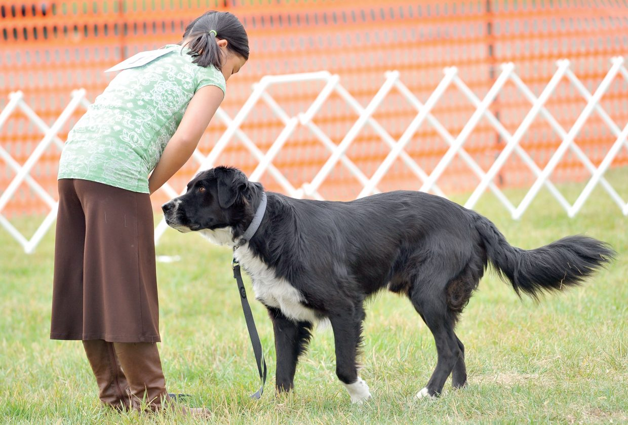 Kelly Hilley shows her dog at the Routt County Fair on Monday morning. The dog show traditionally is one of the first events in what will be a busy week for many children at the annual fair.