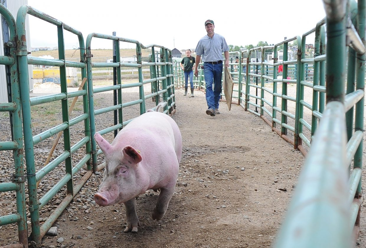 Dan Meyer and his daughter Emma heard a pig to its pen at the Routt County Fair on Tuesday afternoon in Hayden.
