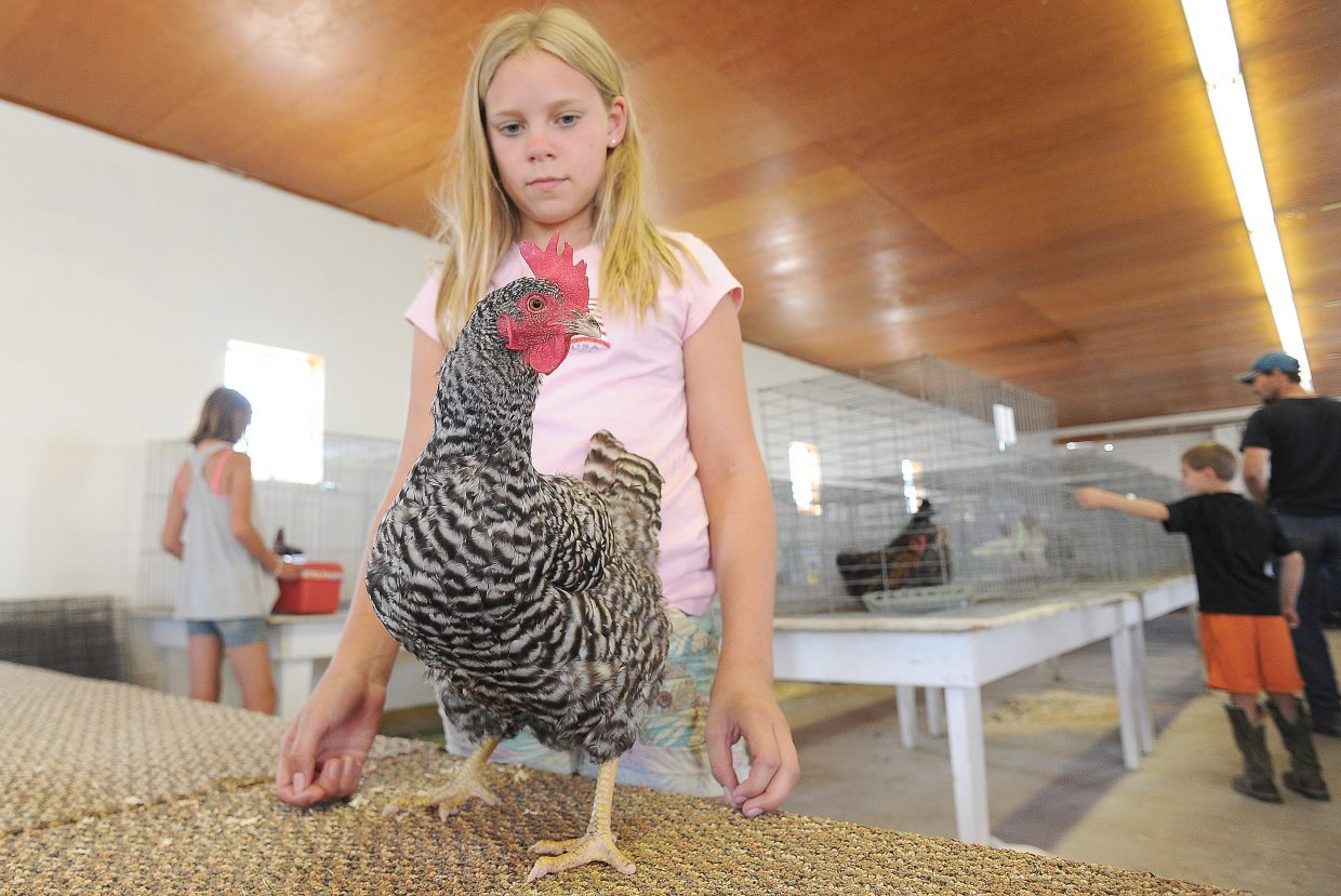 Leona Thurston gets a feel for the judge's table for the poultry show during check-in at the Routt County Fair on Tuesday. The poultry show is at 9 a.m. Wednesday in the small animal barn.
