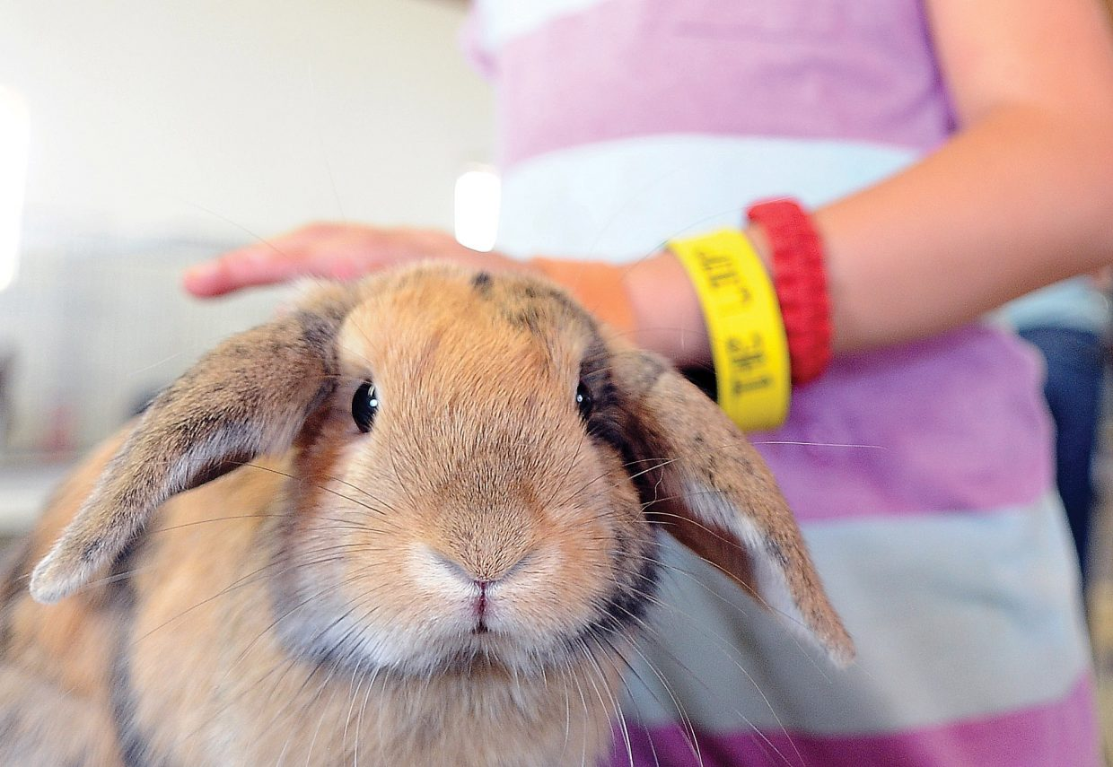 Anna Dean pets her rabbit, Pi, during check-in at the Routt County Fair on Tuesday afternoon. The rabbit show is scheduled for 9 a.m. Thursday.