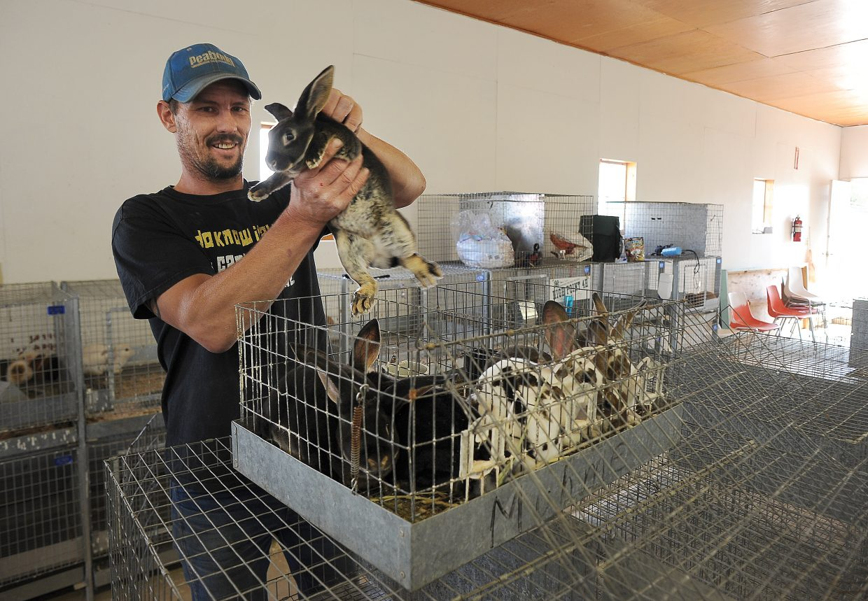 Jared Dillon helps unload Monique Archibeque's rabbits during check-in at the Routt County Fair on Tuesday afternoon. The rabbit show is scheduled for 9 a.m. Thursday.