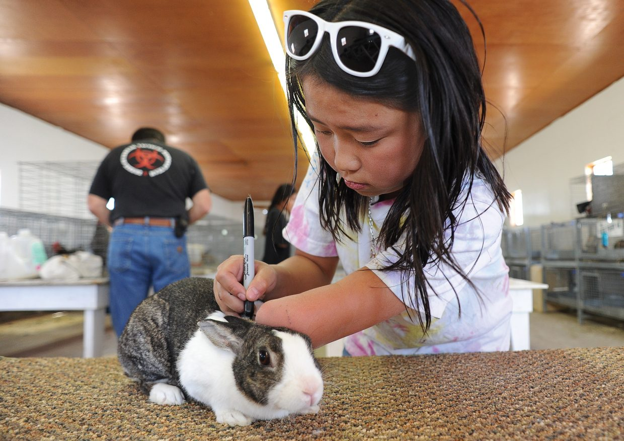 Autumn Hilley marks the ear tag of her rabbit during check-in at the Routt County Fair on Tuesday afternoon.