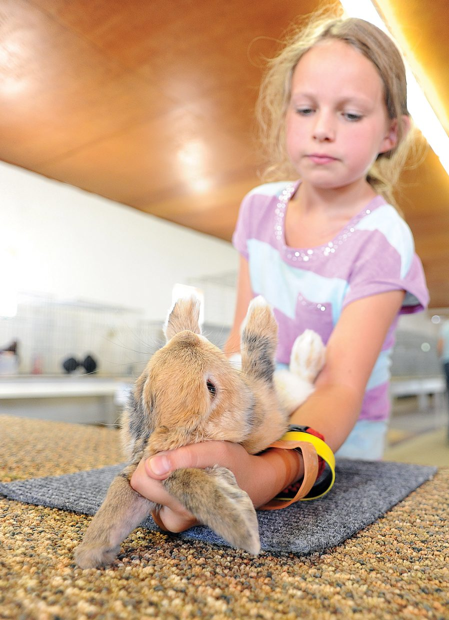 Anna Dean lays her rabbit, Pi, on its back while during check-in at the Routt County Fair on Tuesday afternoon.