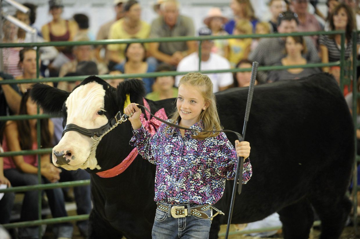 Alex Camilletti, of Hayden, shows her reserve champion steer, Flapper, on Saturday during the Routt County Fair 4-H livestock sale. The number of animals in the sale was up this year along with the selling prices compared with last year. The 4-H members sell their livestock projects and typically use the proceeds to pay for college. This year, 10 percent of the proceeds were being donated to 4-H members who have been impacted by the Black Forest Fire. The livestock sale went on as usual despite a wildfire that burned an estimated 800 acres of vegetation Saturday just north of Hayden.