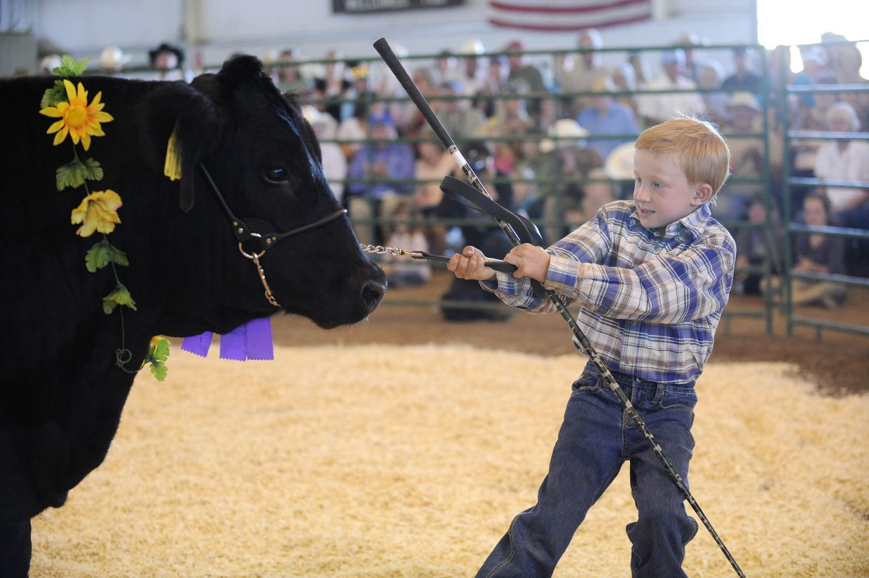 Emmitt Meyring tries to get his steer to move while showing it during Saturday's Junior Livestock Sale at the Routt County Fairgrounds.