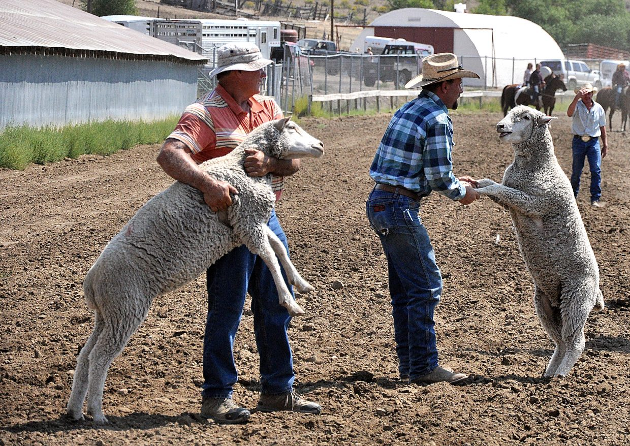 Chad Day, right, and Chris Decker round up two of the 30 sheep that escaped from the mutton bustin' competition Sunday at the Routt County Fair in Hayden.