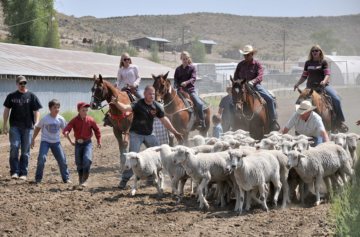 Horseback riders, volunteers and children help round up a herd of sheep that escaped from the mutton bustin' competition Sunday at the Routt County Fairgrounds in Hayden