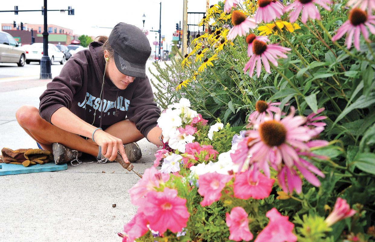 Merry Morgan works on the flowers lining the parking lot of the Old Town Hot Springs. Morgan was trading her time to help pay for her yearly pass to the downtown health and fitness center.