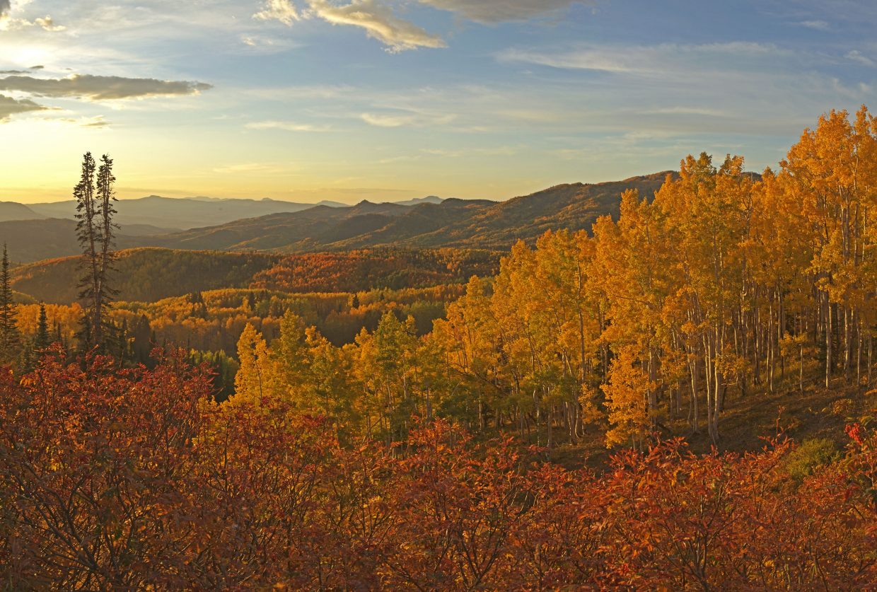 "The sun sets over a large area of aspens known locally as ""Rainbow Ridge"" along the road to Buffalo Pass."