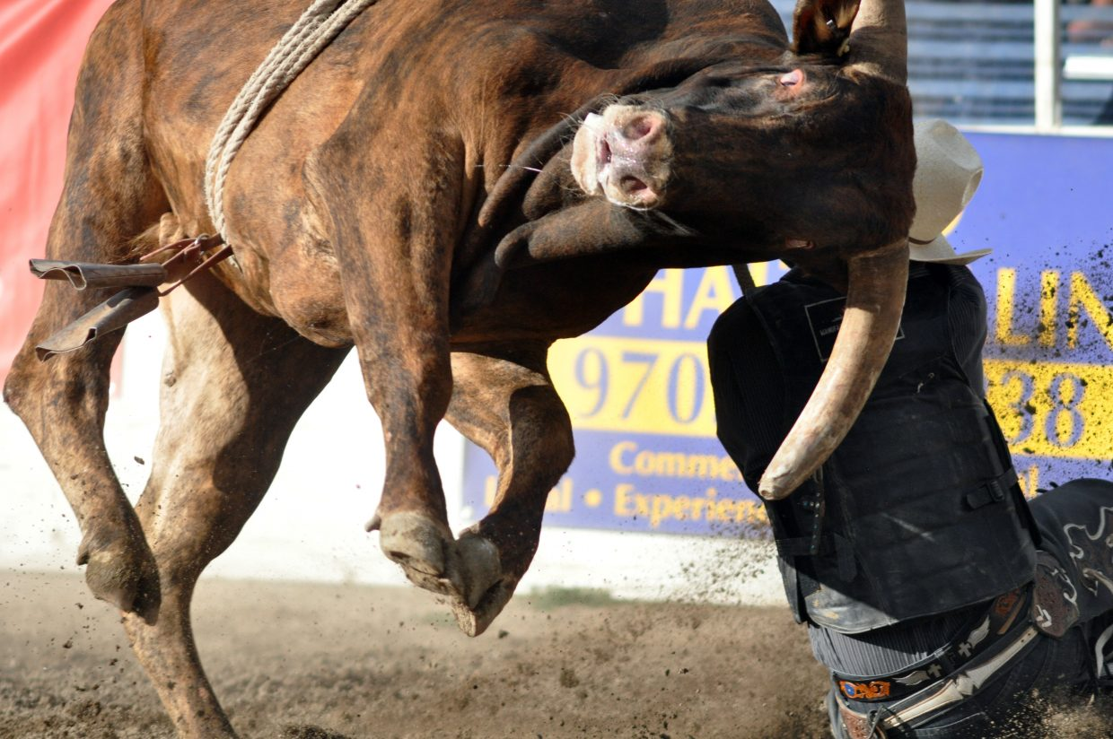 A bull ejects a cowboy on Sunday during the Rocky Mountain Bull Bash.