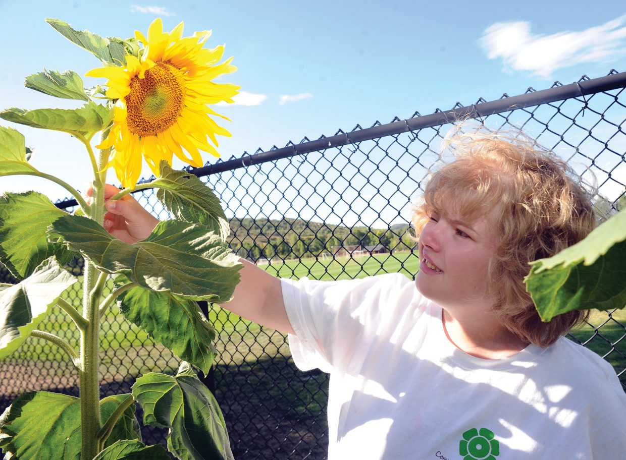 Katie Henderson checks out a sunflower in one of the beds for the Community Cultivation Project. Community Cultivation, a program of the Yampa Valley Autism Program, is a horticulture program for youths with disabilities or a part of at-risk populations.