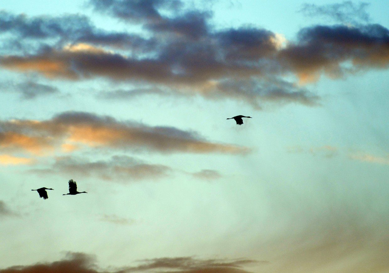 Cranes fly through the early morning Routt County sky Sunday.