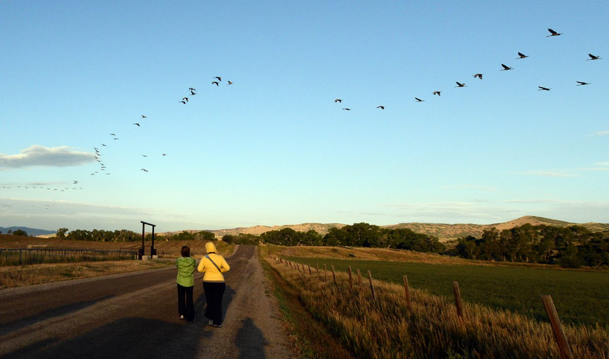 Several viewers watch as a flock of cranes fly overhead Sunday morning.