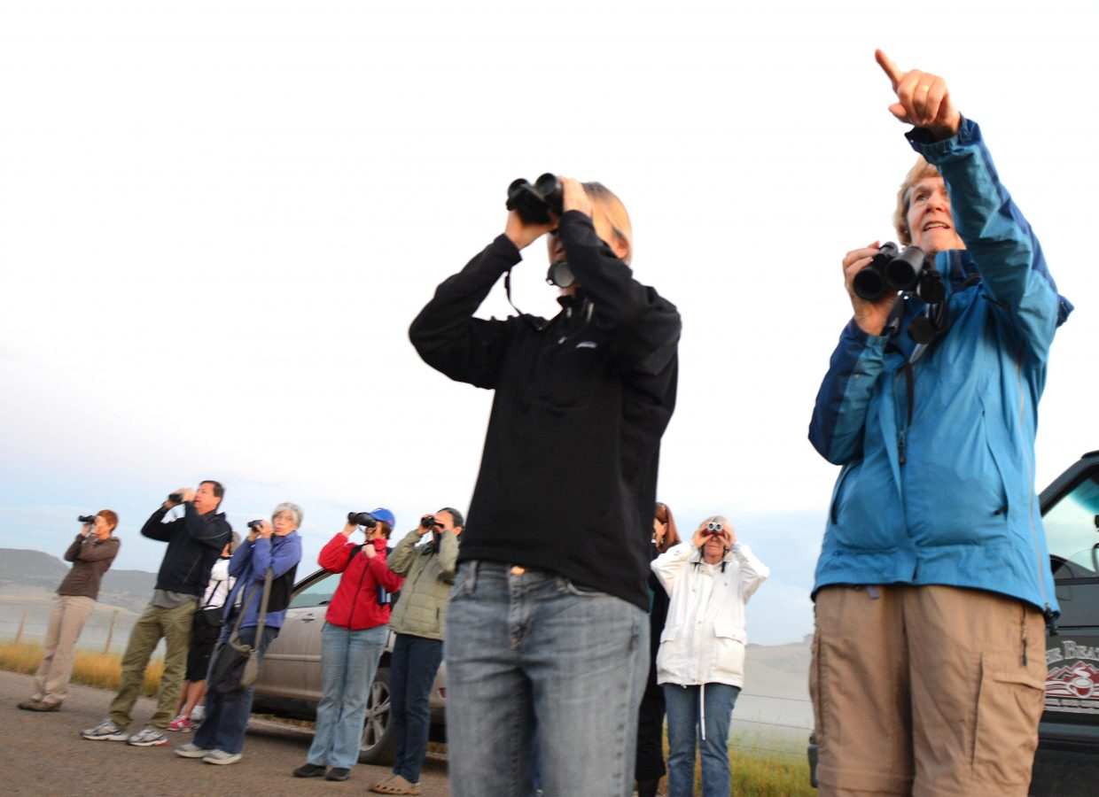 Nancy Merrill points out cranes for eager spotters Sunday morning.