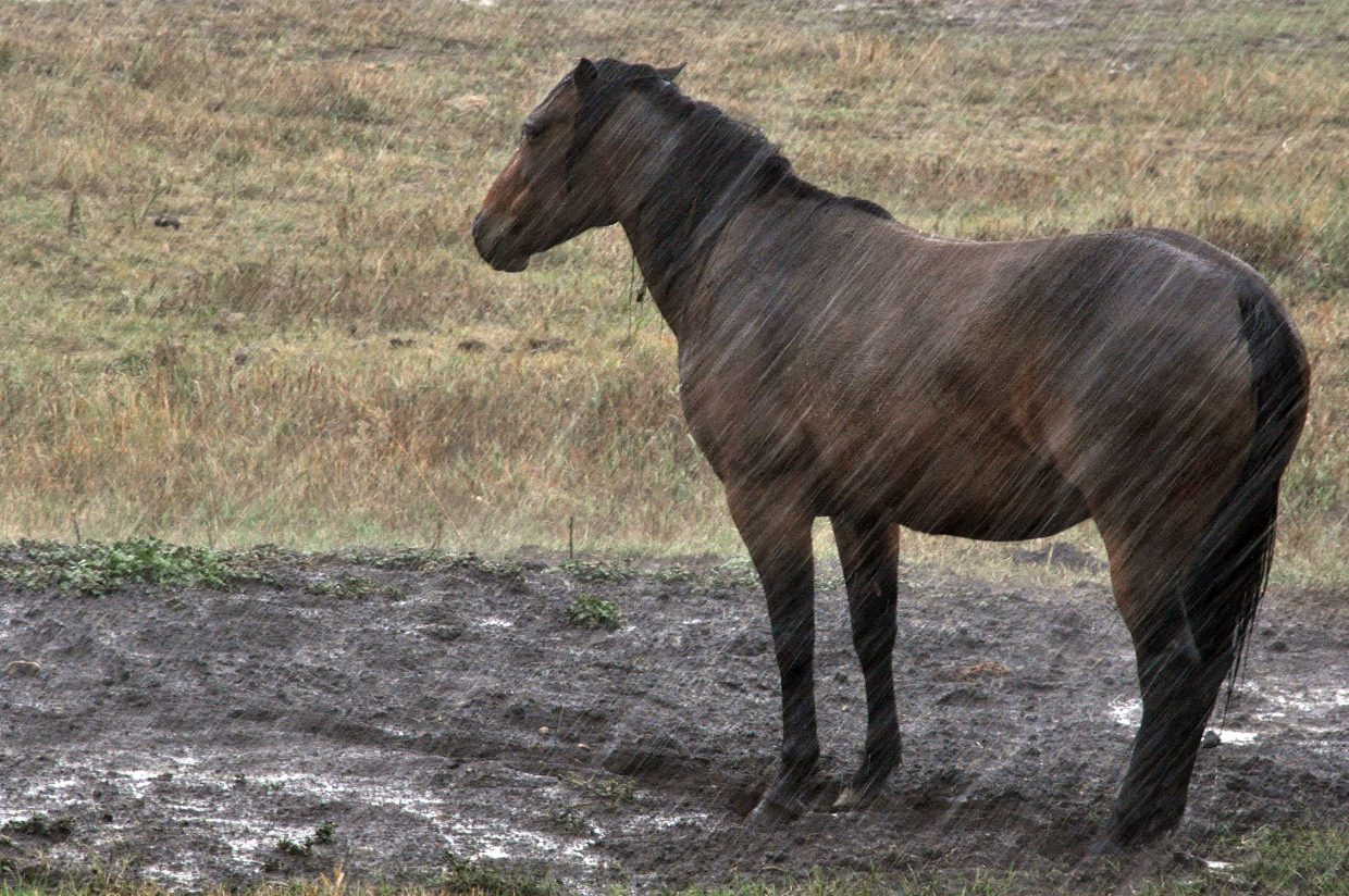 A horse weathers a downpour Tuesday on a ranch off Twentymile Road.
